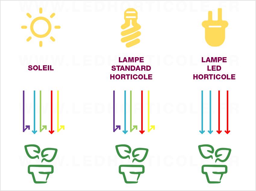 schema rayon lampe horticole